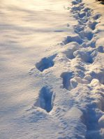steps in the snow by eperlekvar