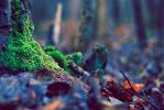 Forest2 by JRtheDude