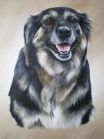 Millie by petportraitman