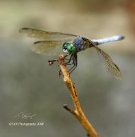 A Small Subject by TRBPhotographyLLC