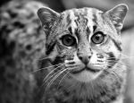 Curious by Ornicar-photographie