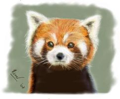 Red panda by ojntoothpaste