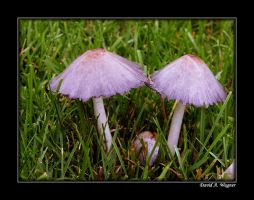 'Shrooms by David-A-Wagner