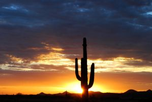 Saguaro Sunset by Phenix59