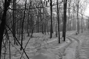 Snowy Woods by Elppin