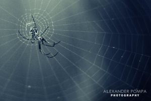 Hard working spider by AlexanderPompa
