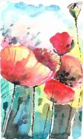 poppies by bemain