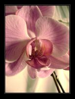 orchid. by blindXscream