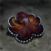 Octopus on the challenge. 40 minutes by SalamanDra-S