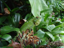 Creature Feature No4: Lizard by TheXILexile
