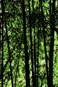 Bamboo Forest by Alegion-stock