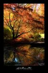 All the Colors of Fall by UrbanRural-Photo