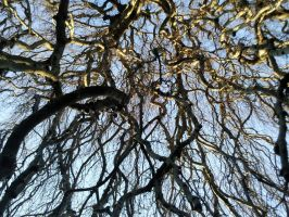 Branches 02 by Fea-Fanuilos-Stock