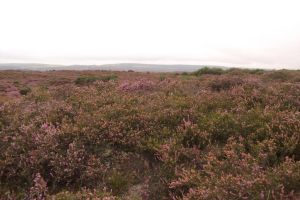Moorland III by feainne-stock