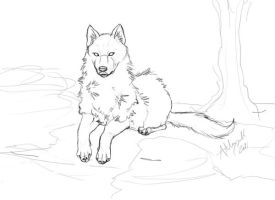 Wolf Sketch by Marcynuk