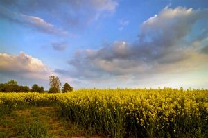 .: Herefordshire Skies :. by Dave-Ellis