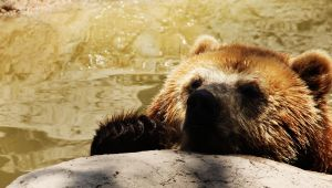 Bathing Grizzly by deliquescing