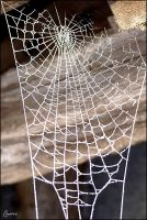 Spider web by Cassiopeeh