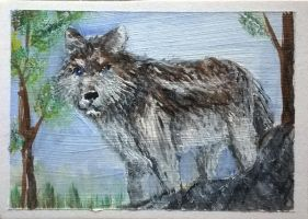 ACEO - Sabine the wolf by sweetpie2
