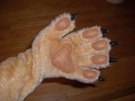 New paws by toberkitty