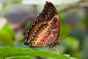 butterfly 16 by horus40