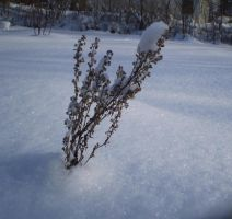 Winter 11 by 116802