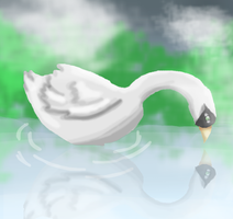 A Swan's Reflection by shuchan01