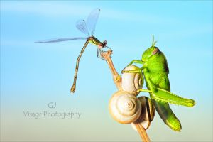 The Hopper and the Damsel by GJ-Vernon