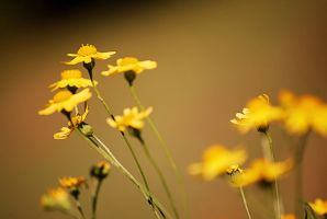 Autumn's Flowers | II by TimeLocket