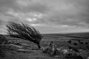 Windswept by RyanTrower