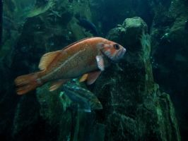 Fish 1 -- Sept 2009 by pricecw-stock