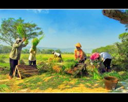 farmer pesta by hendradarma28