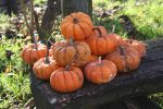 Pumpkins by CD-STOCK