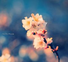 Bloom by MyLifeThroughTheLens
