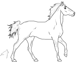 Horse Lineart 2-Young Stallion by Kleo94