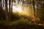 STOCK: Misty Forest light 8 by needanewname