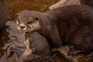 Otters by Takadk