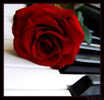 Rose On Piano II by yhdenenkelinunelma