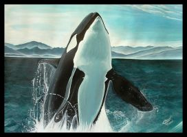 The Killer Whale in Arctic by cedricmoulin