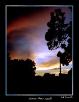 Sunset Trees 2006 by andys184