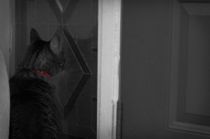 May I Come in, Now? by Mimek