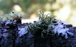 Lichens in the mountains by blogdrakeart