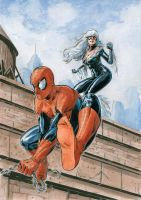 Spidey-blackcat by Nicolas-Demare