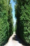 Tree-lined Path by CompassLogicStock