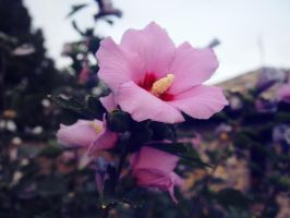 Pink flower by ilonytestal1995