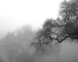 Misty Morning by Orcadus