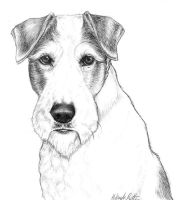 nikkiburr - Wire Fox Terrier by nikkiburr