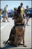 Working Dog by MauserGirl