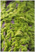 A Closer Look of the Mosses by barneyv2010