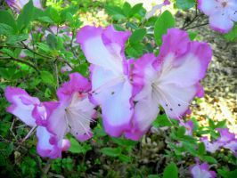 Twin Floral by sioranth